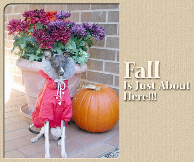 Fall Is Here!